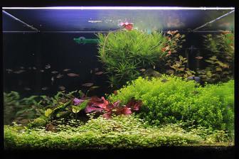 Za necele dva mesiace sa rastlinky rozrastli, hemianthus a hydrocotyle (tie dve v popredi) uz musim krotit...