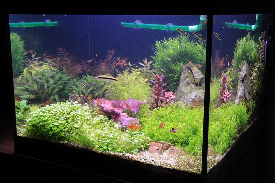 Naše nové akvárium - Po skrátení je v akváriu zas aká-taká rastlinná rovnováha :)
