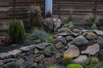 Musinka pózuje pri rannom venčení na záhrade.