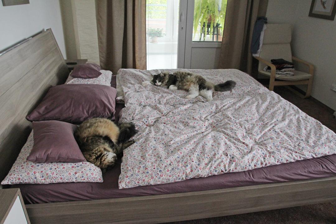 Naši kočičáci - Keď chceme mať od mačiek kľud, stačí nechať otvorenú spálňu, kam normálne nesmú, keď tam nie sme my. Potom tam prespia kľudne aj pol dňa...