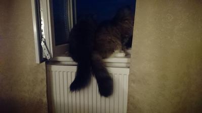 Keď sa kuká von z okna, tak sú kamaráti :)