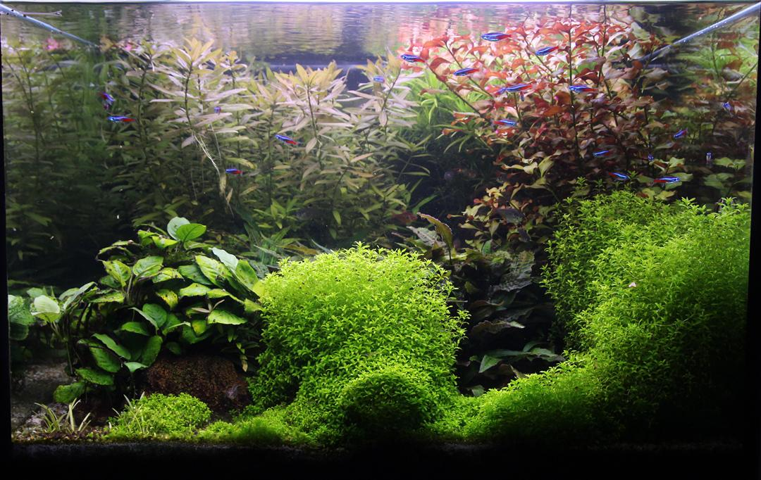 Naše nové akvárium - Akvarium po dovolenke, mesiac neboli rastliny skratene...