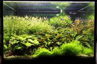 Pridavam aktualne fotky akvaria. Na naliehanie manzela sme k novemu roku zmenili osvetlenie za led-ky a vyzera to, ze rastlinam zmena nejak zasadnejsie nevadi...