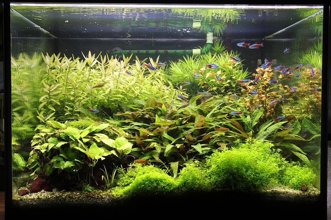 Naše nové akvárium - Pridavam aktualne fotky akvaria. Na naliehanie manzela sme k novemu roku zmenili osvetlenie za led-ky a vyzera to, ze rastlinam zmena nejak zasadnejsie nevadi...