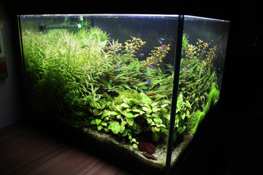 Naše nové akvárium - A este pohlad z boku.