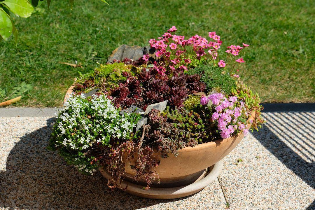 Naša záhradka 2020 - Kvetinacova skalka sa tiez rozkvitla.