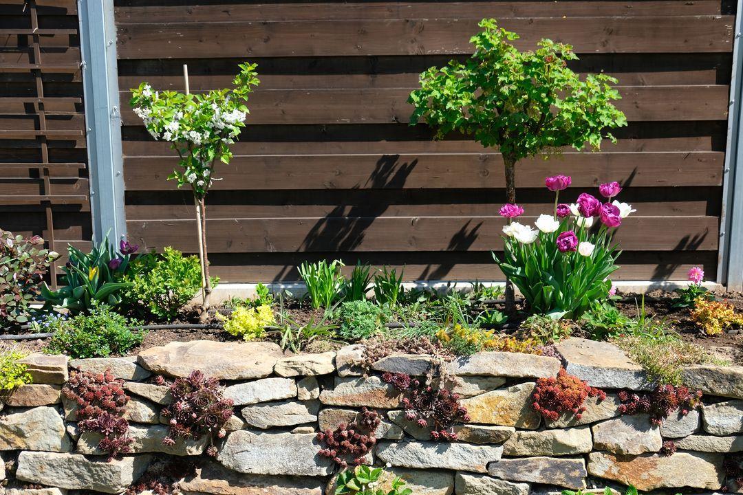 Naša záhradka 2020 - Obrázek č. 35