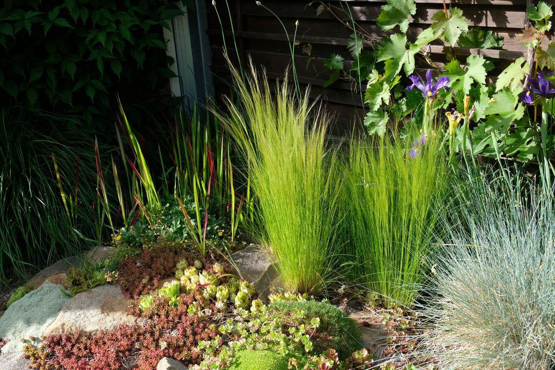 Naša záhradka 2020 - Obrázek č. 48