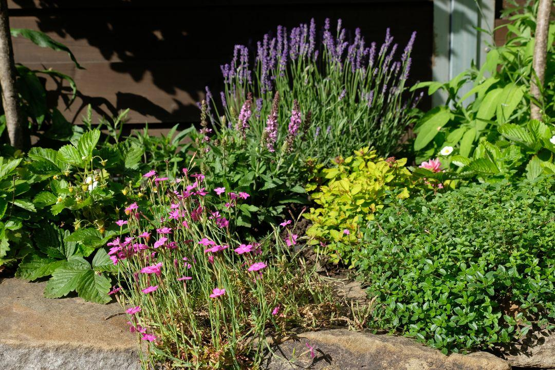 Naša záhradka 2020 - Obrázek č. 47
