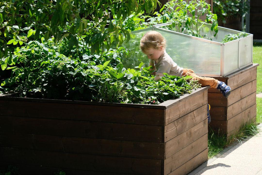 Naša záhradka 2020 - Ked sa nedaju jahody dociahnut zo zeme...