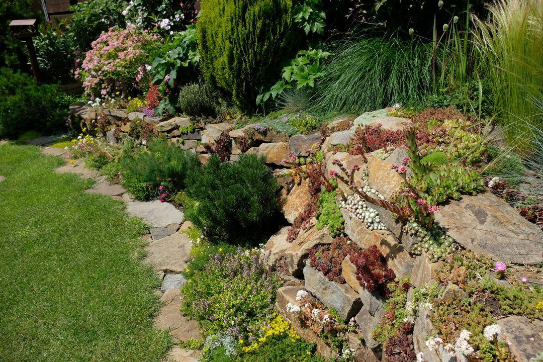 Naša záhradka 2020 - Obrázek č. 57