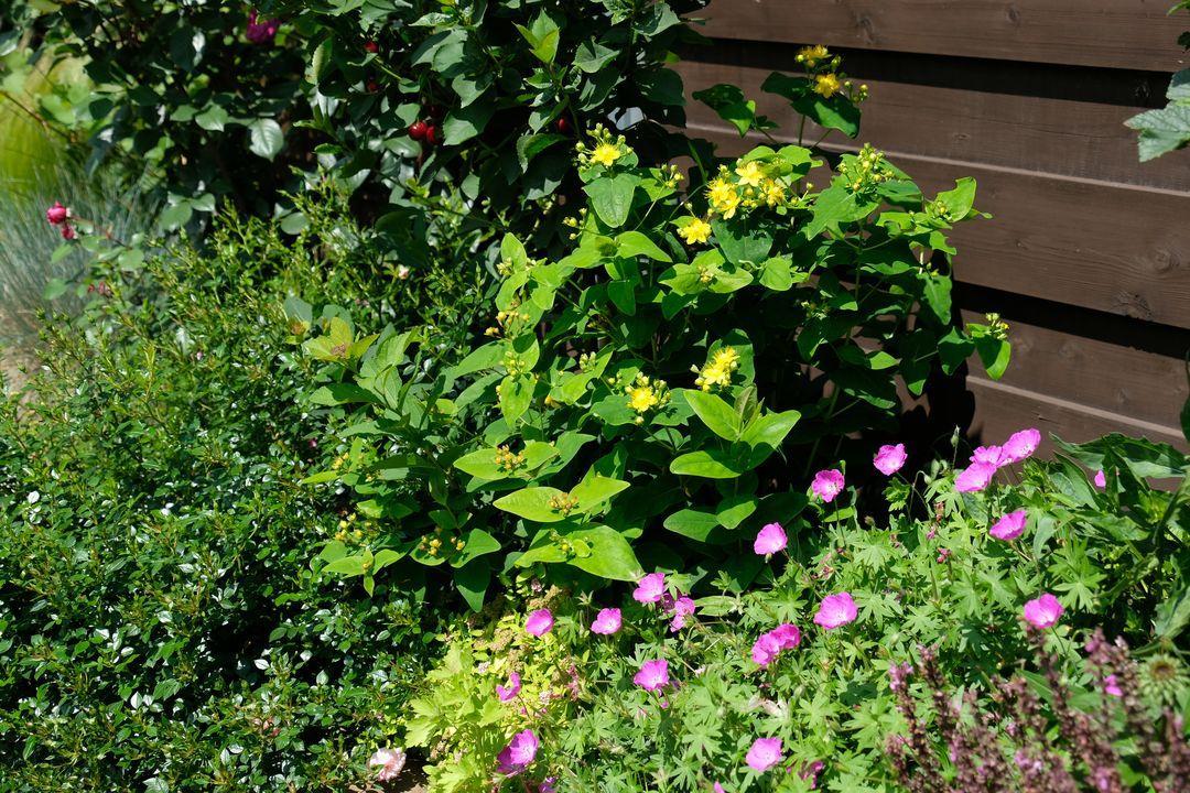 Naša záhradka 2020 - Obrázek č. 59