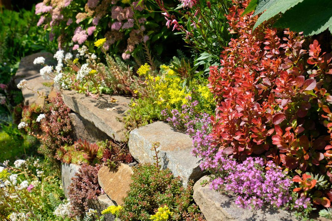 Naša záhradka 2020 - Obrázek č. 65