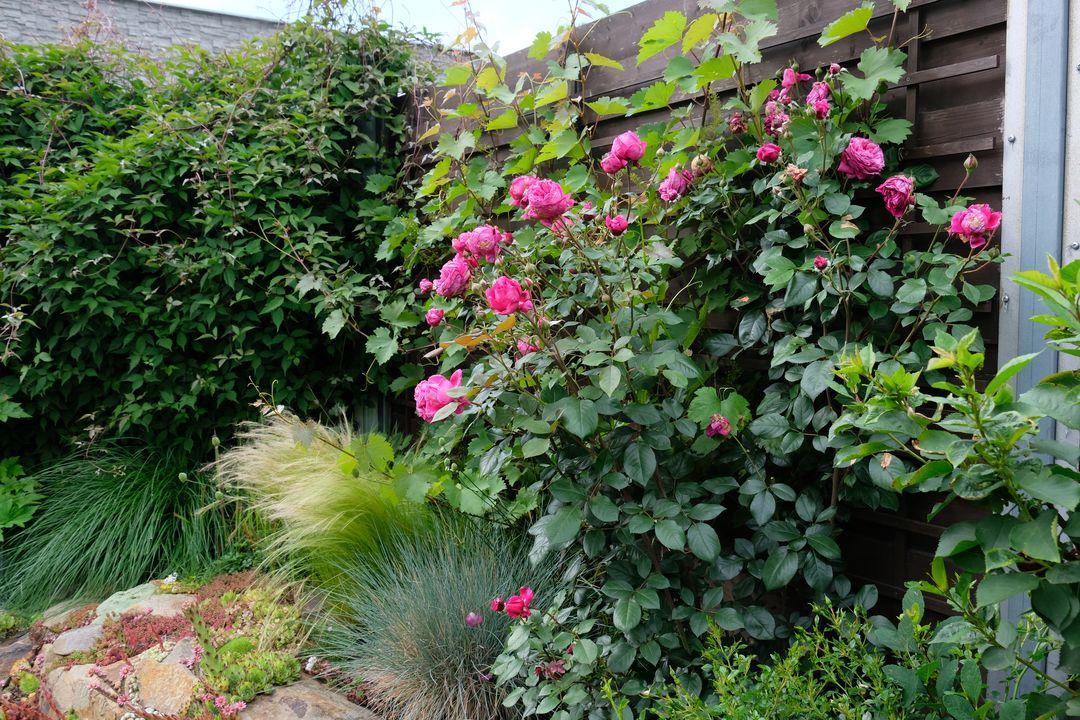 Naša záhradka 2020 - Obrázek č. 70