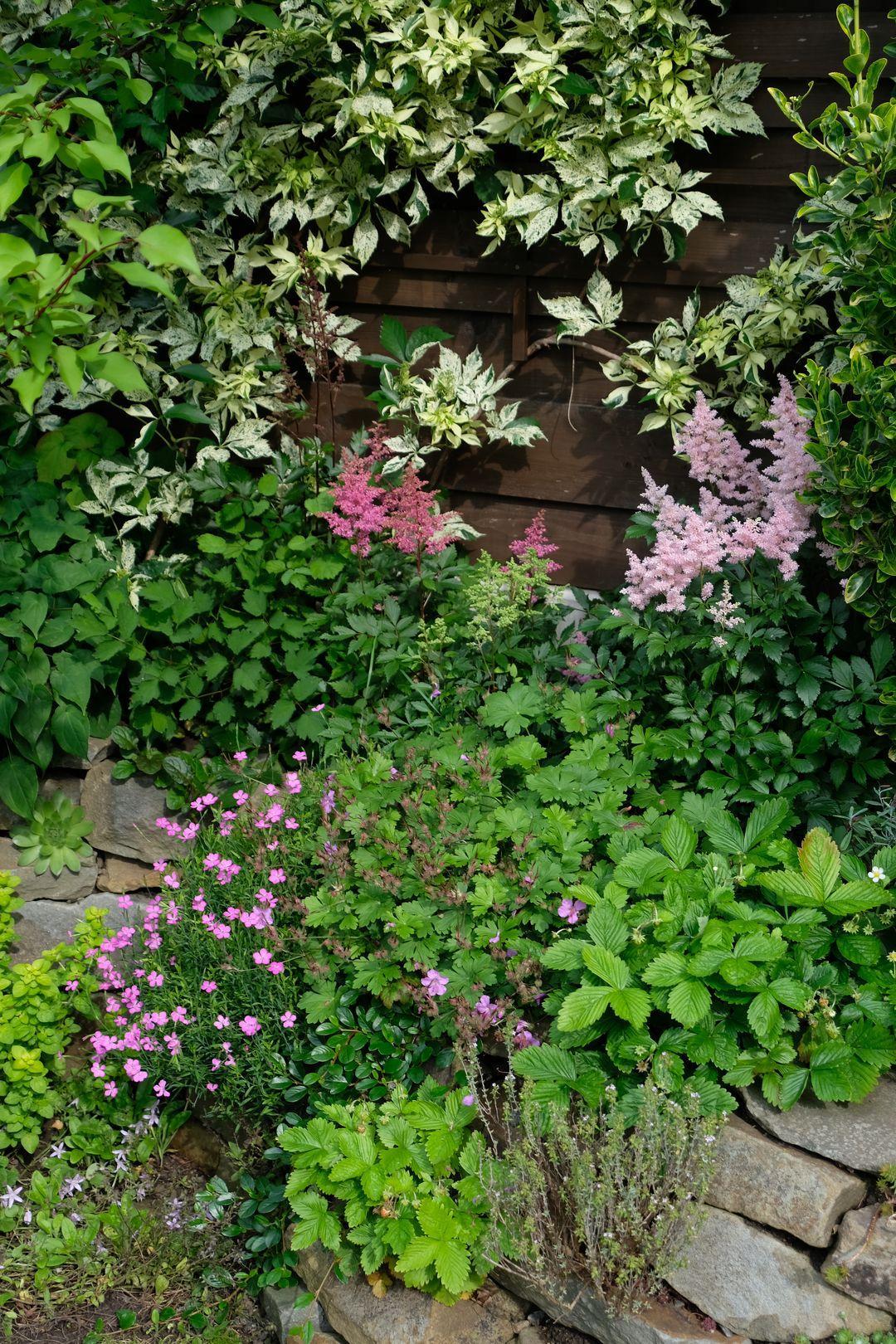 Naša záhradka 2020 - Cechravy uz tiez vykvitli.