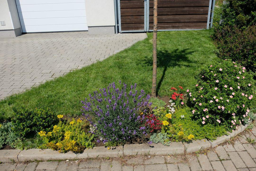 Naša záhradka 2020 - Vedla levandule cerveny hvozdik a novy cerveny rebricek.