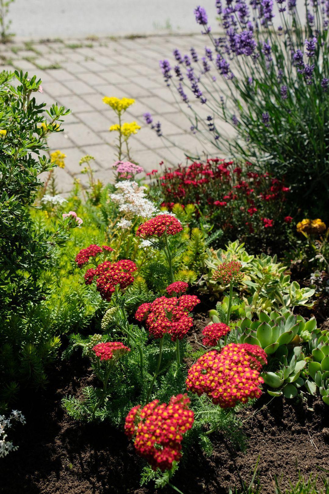 Naša záhradka 2020 - Este raz novy cerveny rebricek