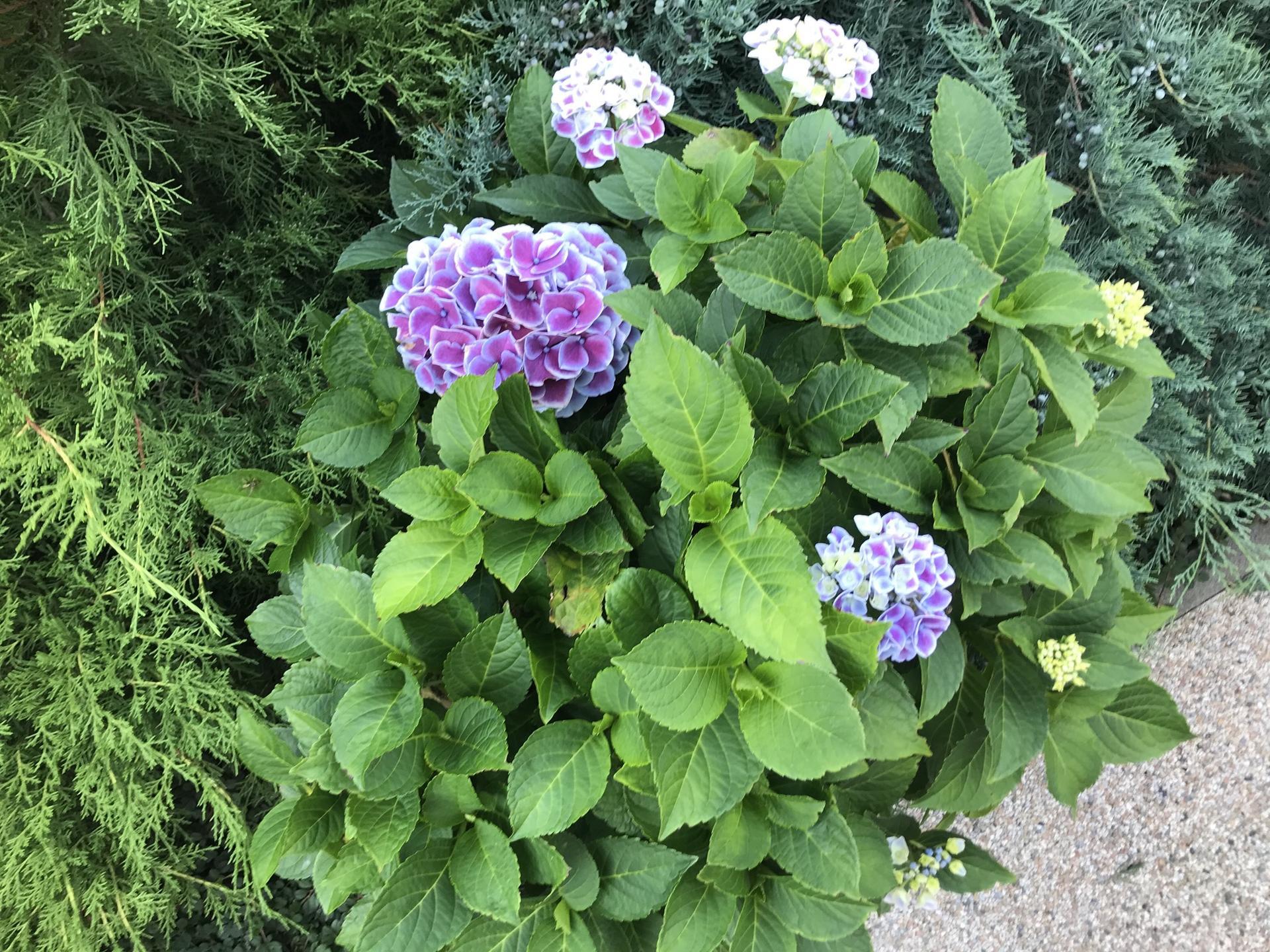 Naša záhradka 2020 - Obrázek č. 77