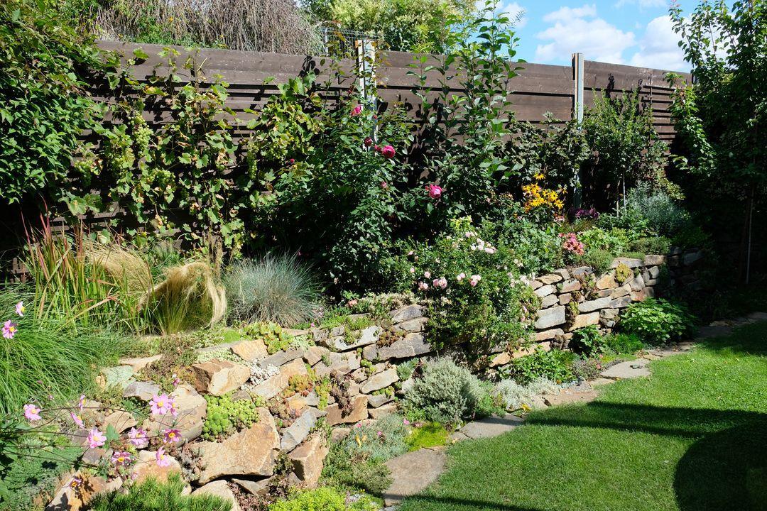 Naša záhradka 2020 - Obrázek č. 79
