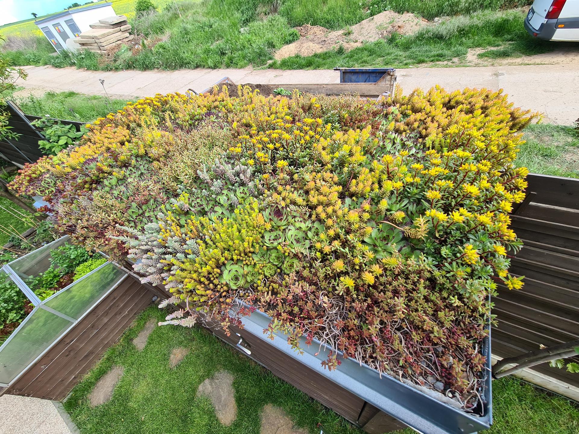 Naša záhradka 2021 - Zelena strecha na zahradnom domceku je uz cela porastena.