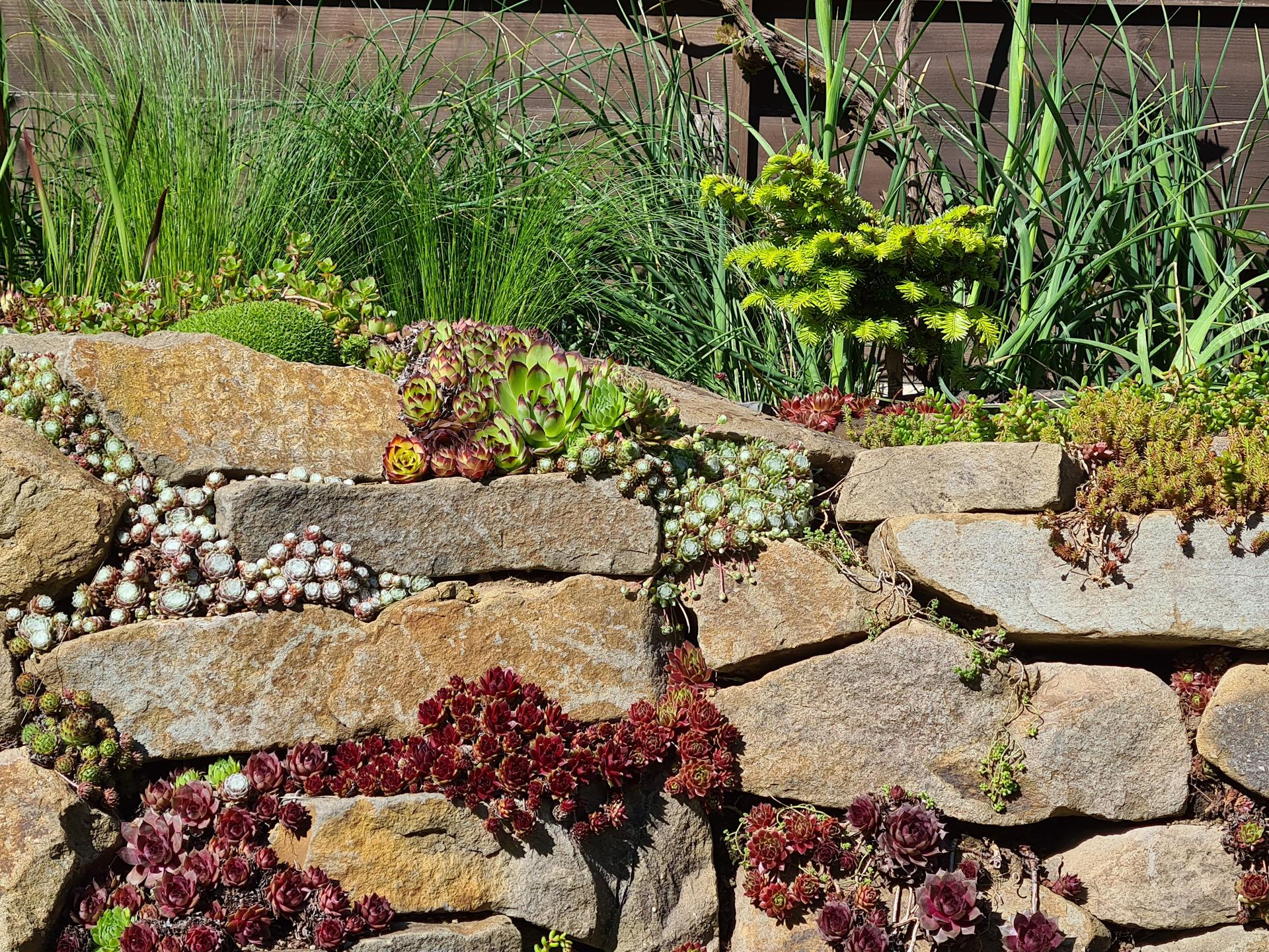Naša záhradka 2021 - Na skalke vymenena trava za malu jedlicku, snad sa jej bude darit