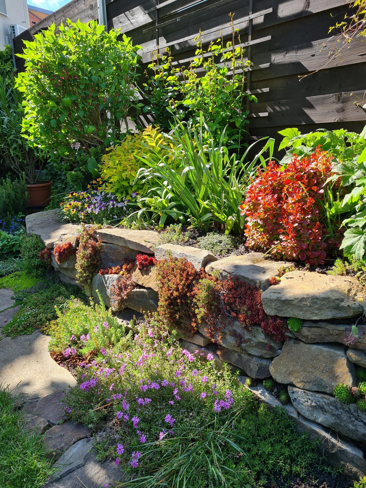 Naša záhradka 2021 - Obrázek č. 5