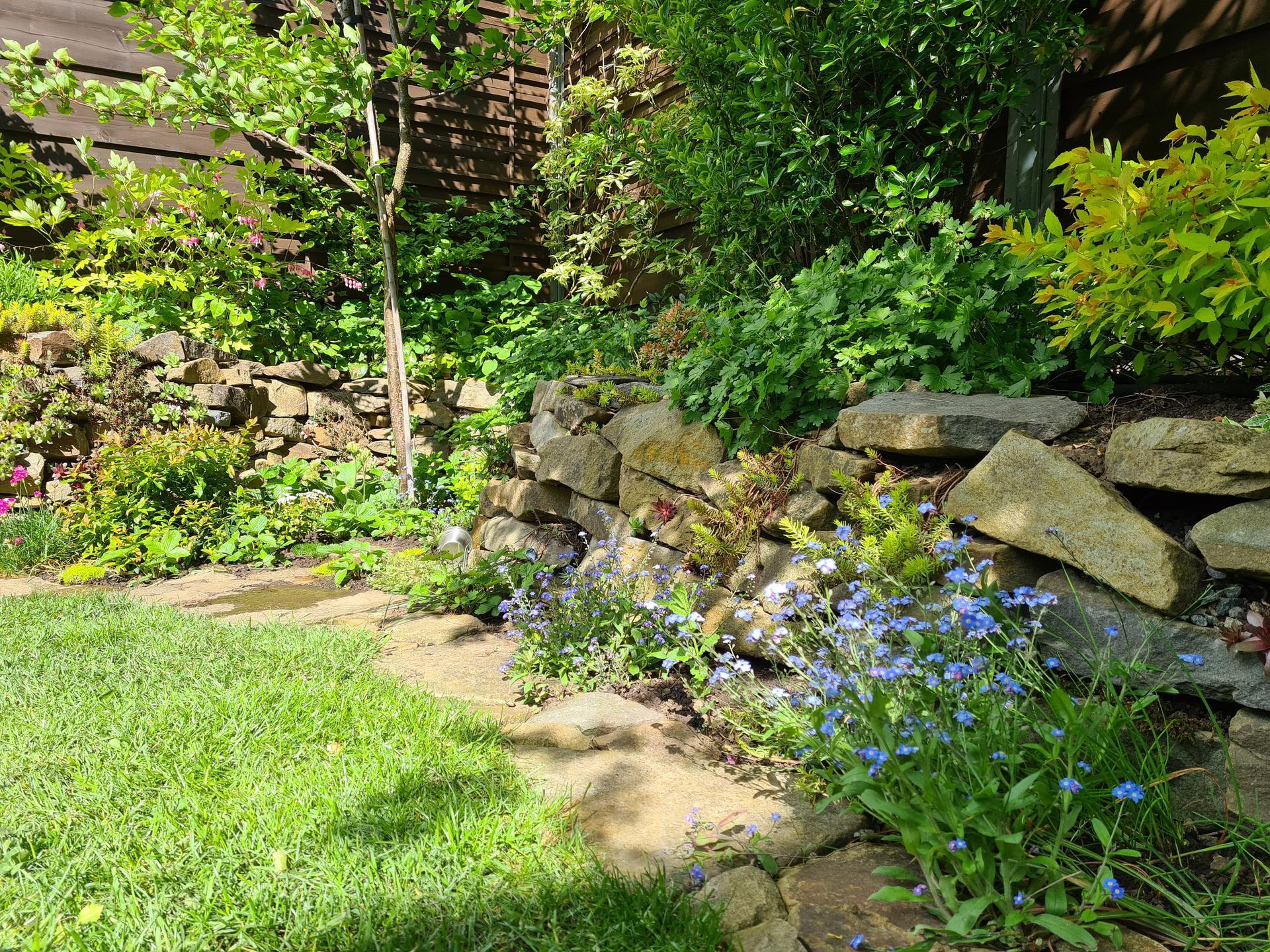 Naša záhradka 2021 - Pod marhulou tento rok vymenena trava za boruvky a jahody.