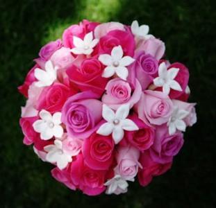 Moje ružové predstavy :) - Veľmi pekná :) je ťažké rozhodnúť sa v tejto dobe :/