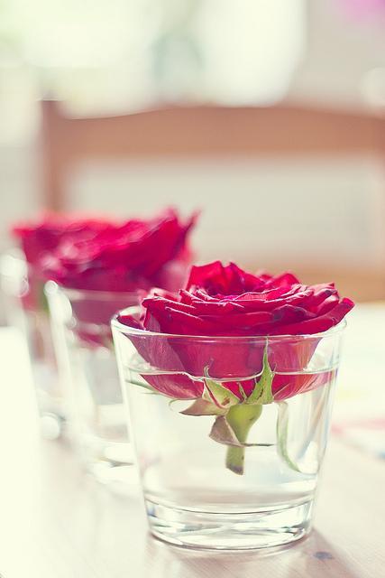 Moje ružové predstavy :) - Veľmi zaujíímavéé :)