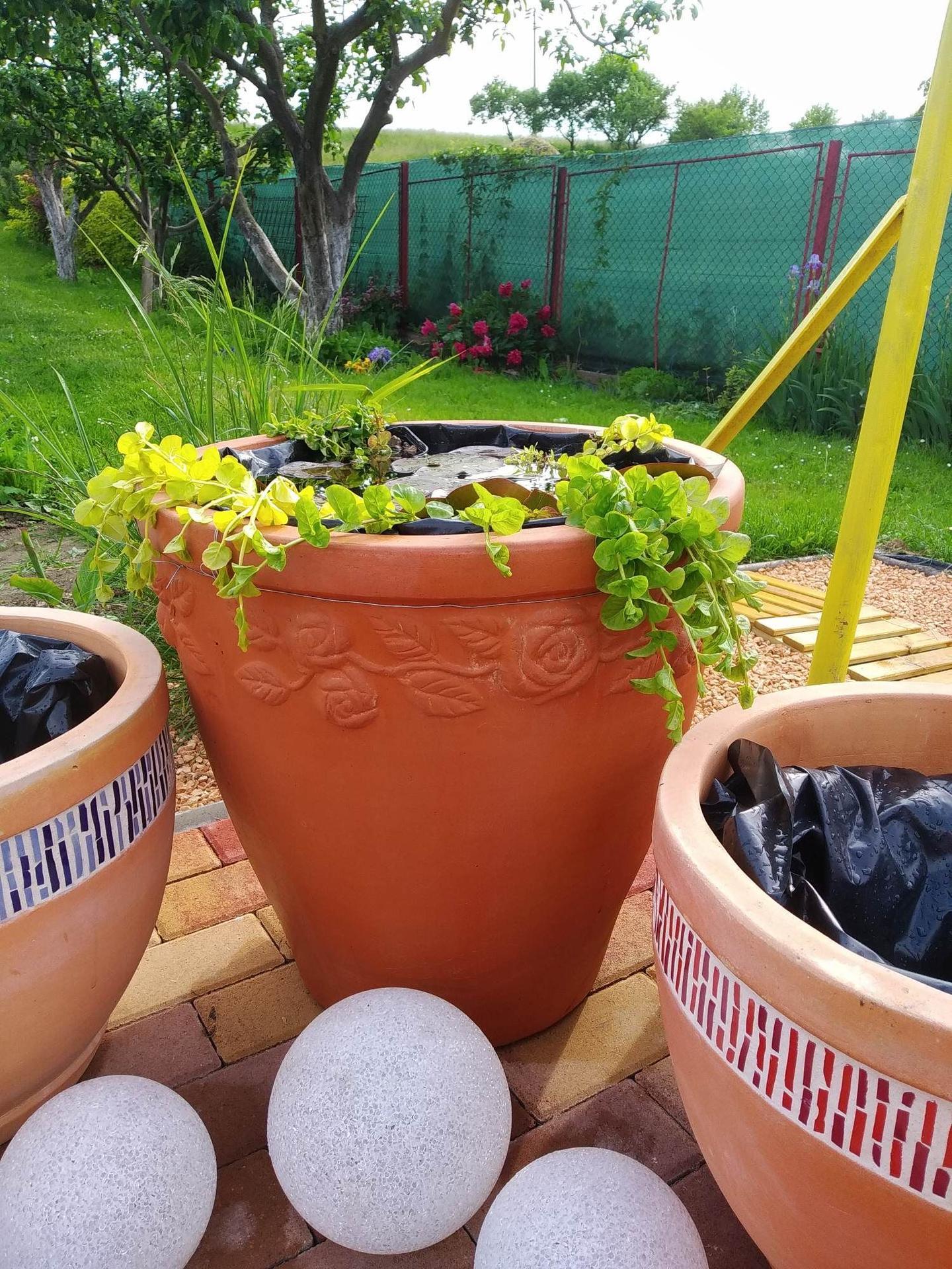 pestovanie lekna v nádobe - Obrázok č. 3