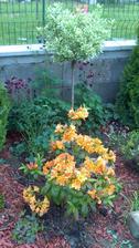 ufff...toto mi tam skočilo...a neviem to vymazať../časť mojej záhrady/