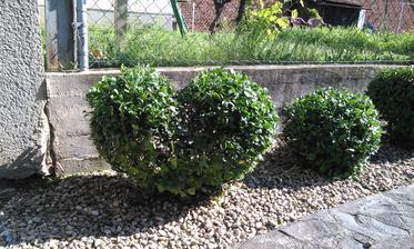 Hoci je v dome stále čo robiť, ale tak treba sa postarať aj o záhradu. Pre priateľku som vystrihal srdce. Bol to môj prvý pokus záhradníka a vyšiel :)