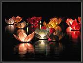 Lampióny vodní/létající,