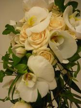 Orchiei a růže Vendela