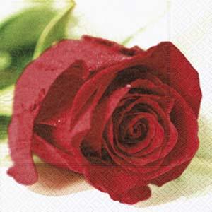 Rose wedding - Obrázok č. 17