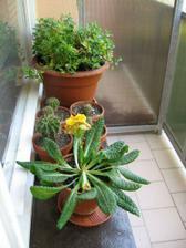 květiny na kuchňském balkónu