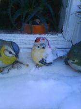 i ptáčkové zmrzli