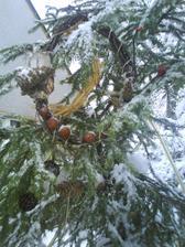 detail stromku venku.jpg