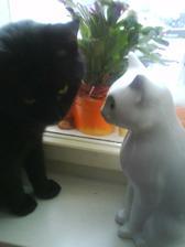 nefot mám tu kočku
