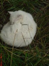 taky tu máme bílé kočky