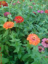 taková krása kvete u souseda