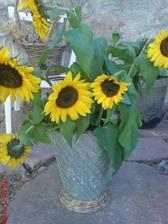 a...moje slunečnice