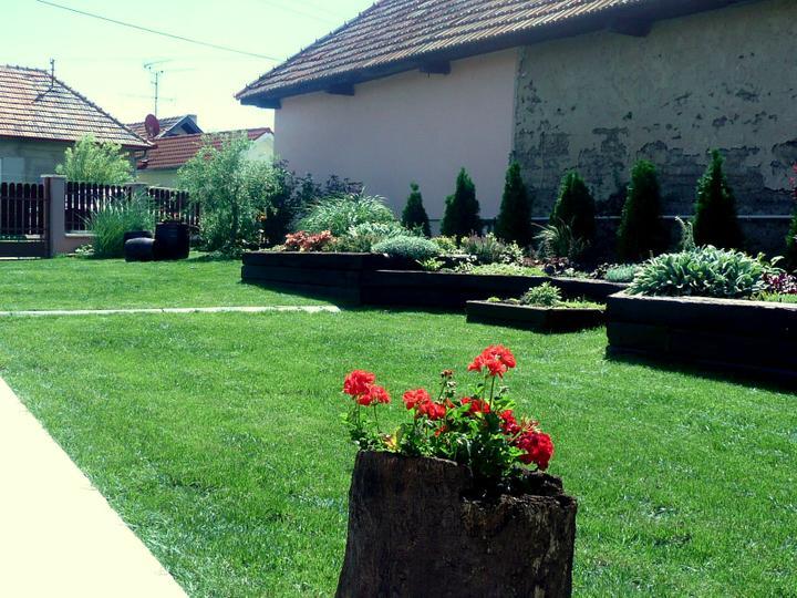 Naša debutová záhradka - Obrázok č. 4