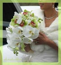 white and green orchids