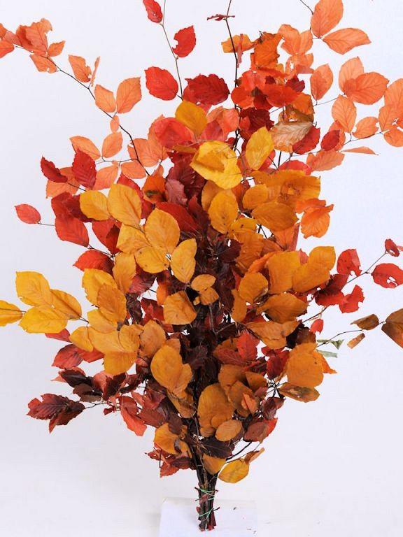NOVÉ  stabilizované bukové konáre s listami v jesenných farbách , vtáčiky z pierok , černice , šípky a ďalšie jesenné dekorácie nájdete v našej ponuke e-shopu - Obrázok č. 4
