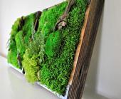Obraz zo stabilizovaného machu a rastlín v dreveno,
