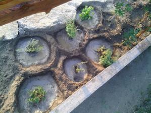 Nová bylinková zahradka