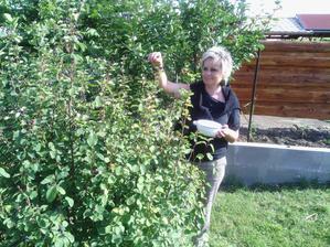 Borůvkovník muchovník je z nej neskutečná úroda