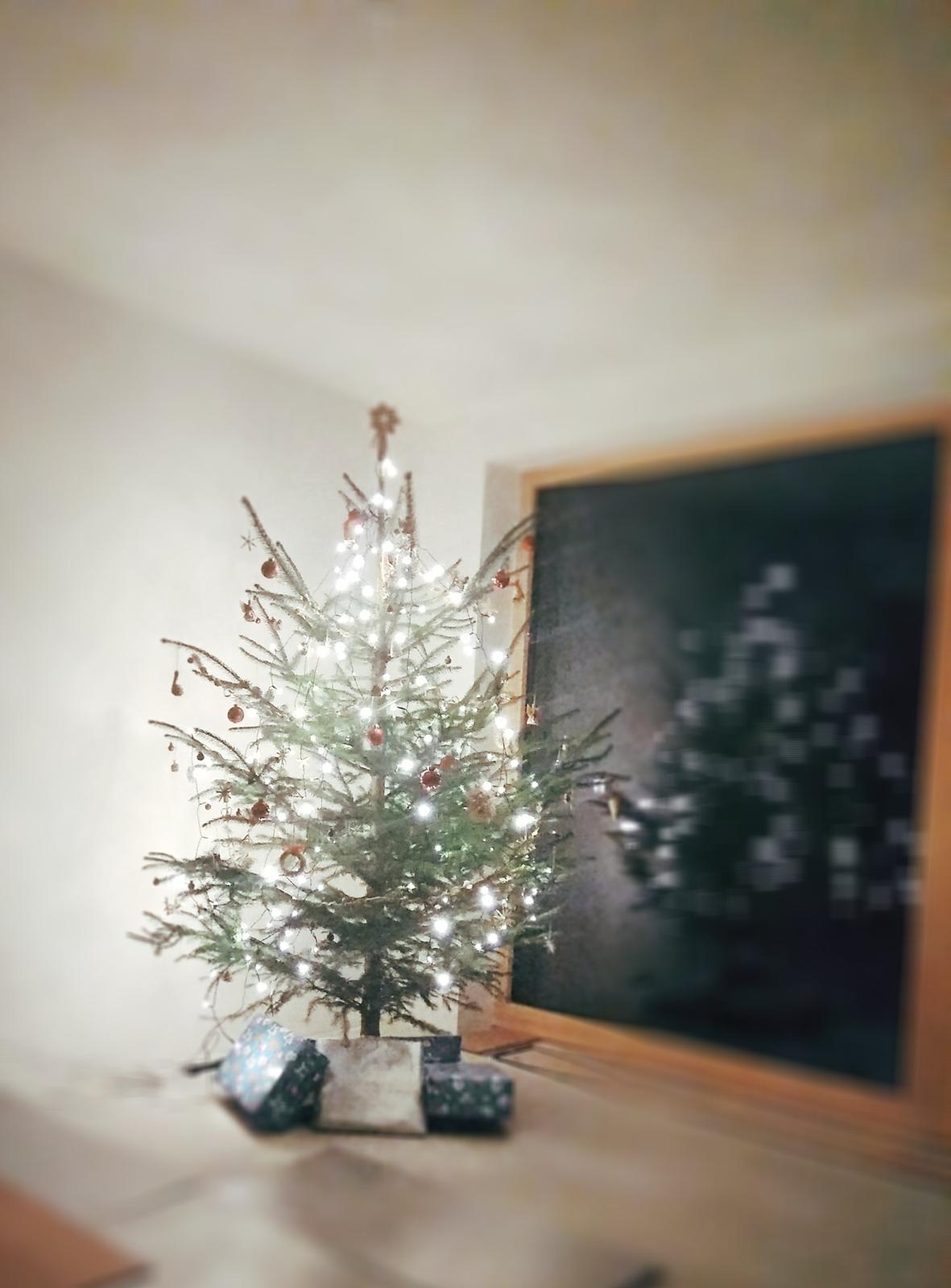 Náš první vánoční stromeček... - Obrázek č. 1