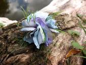 modro-fialový chomáček,